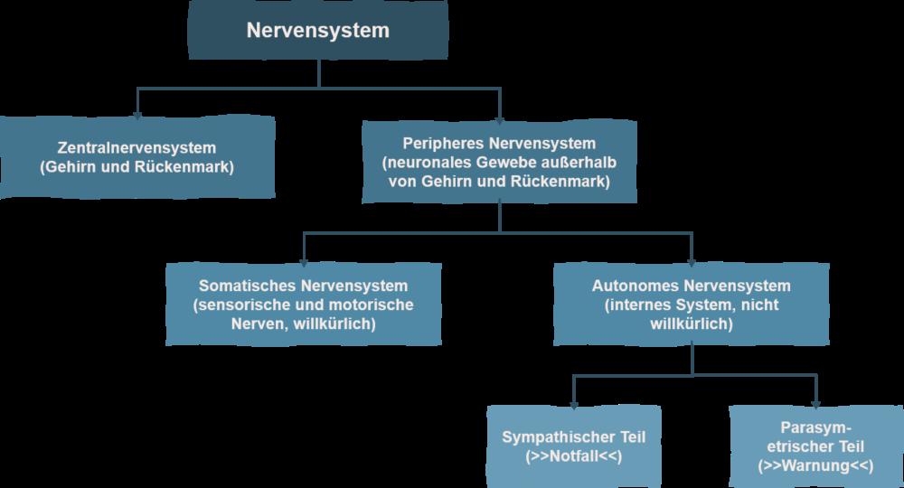 Autonomie_Gehirnstruktur